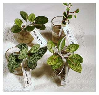 Plant Cutting Favors photo